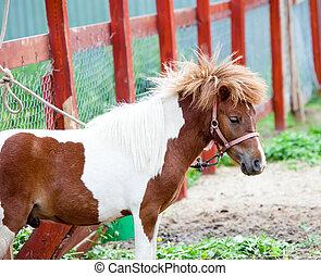 pony, klein, weißes, spotty, rotes