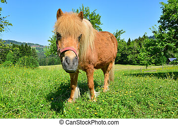 Pony looks into the camera in the pasture