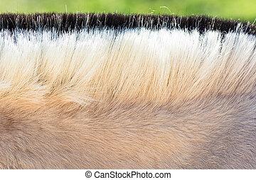 pony., mähne