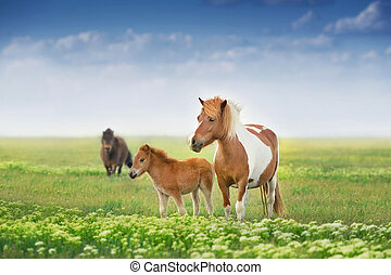 Pony mare with foal
