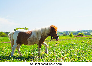 pony on a green meadow
