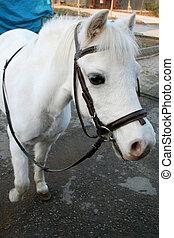 pony portrait