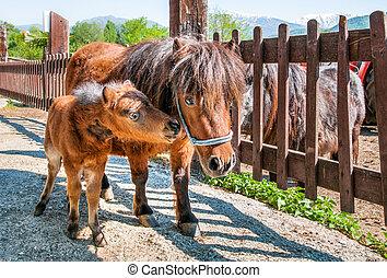 Pony puppy with Mom