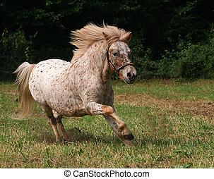 pony - running horse