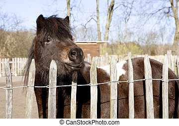 pony stands at the fence