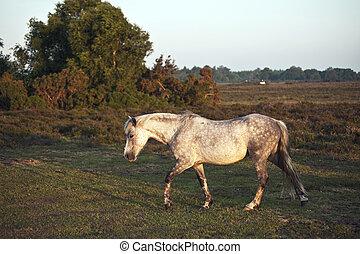 pony, su, bagnato, alba, Ardendo, riscaldare, luce sole, chiudere, nuovo, paesaggio, foresta