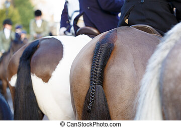 Pony Tail - close up of a braided horse tail