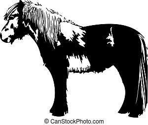 pony, vektor, pferd, freigestellt