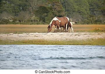 pony, weiden