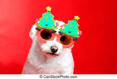 pooch, クリスマス
