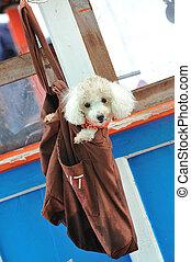 Poodle dog in bag