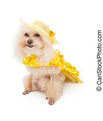 Poodle Dog in Spring Dress
