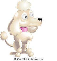 poodle, ilustração, cão