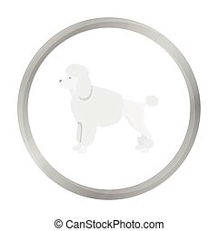 Poodle vector icon in monochrome style for web
