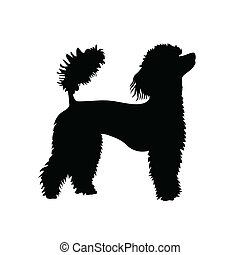 poodle, vector, silueta, francés
