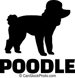 Poodle with breed name