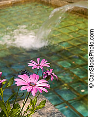 Pool and Flowers