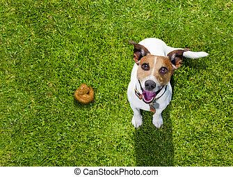 poop, gras, park, dog