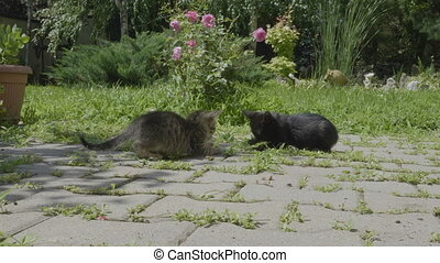 Poor homeless hungry little cats looking for food eating in...