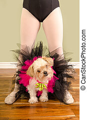 Poor Small Dog In Tutu with Child Ballet Legs