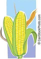 corn -  Pop corn