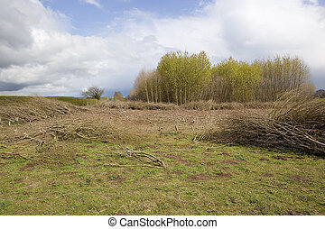 poplar coppice - a springtime landscape with fluffy clouds ...