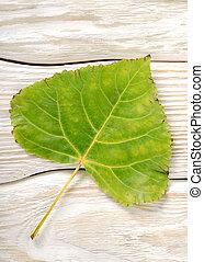 Poplar leaf on a wooden background