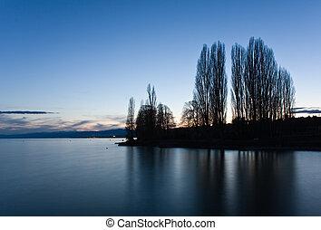 Poplars at night - Silhouette of poplars at night