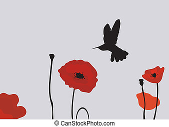 poppies - vector poppies with hummingbird