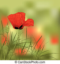 poppies - Illustration of red poppy