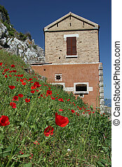 Poppies in front of a house