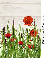 poppies in tall grass - Orange poppy flower and cattails in...