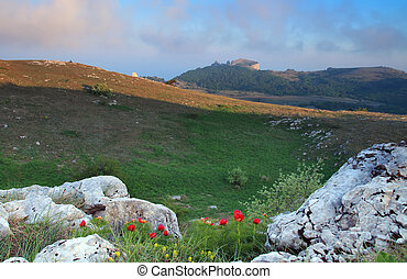 Poppies in the mountain on sunset