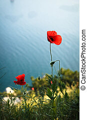 Poppies on the sea background