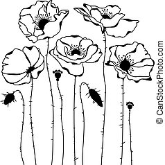 Poppies silhouette on white background - Sketch of poppies...