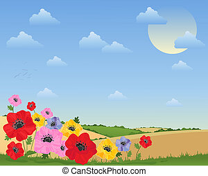 poppy background - an illustration of colorful poppy flowers...