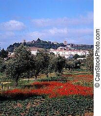 Poppy field, Portel, Portugal.