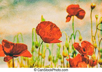 Poppy field vintage background