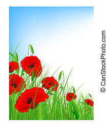 poppy field with clear blue sky and copyspace