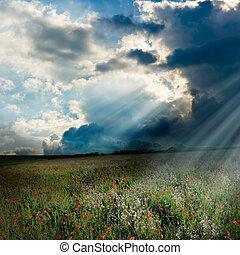 Poppy field with god rays