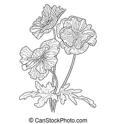 Poppy flower coloring book for adults vector