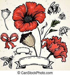 Poppy flower. Red poppies isolated on white background