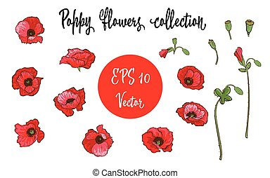 Poppy flower. Red poppies isolated on white background. Vector illustration.