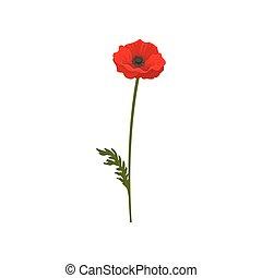 Poppy flower with stem, floral design element vector Illustration on a white background