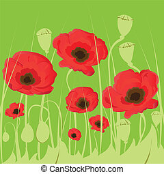 Poppy flowers on green background.