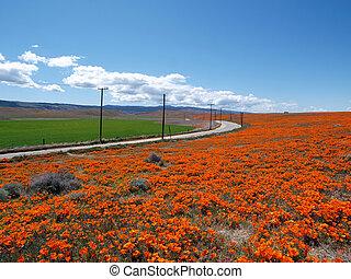 Orange poppies, green fields and open highways near Lancaster, California.