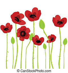 poppy over white background - Poppy over white background