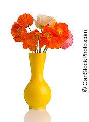 Poppy. - Poppies in a vase on a white background.