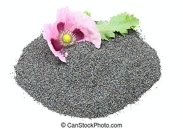 Poppy seed and flower on the white background