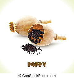 Poppy seed and head isolated on white background vector illustration